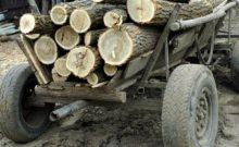 caruta lemne
