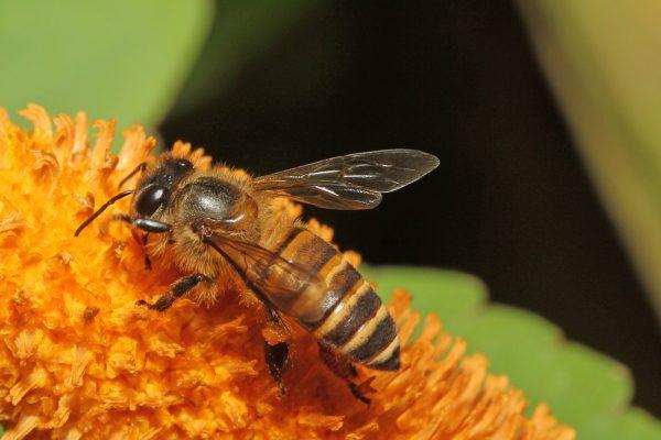 apicultura 3