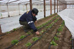agricultura 1