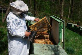 apicultor