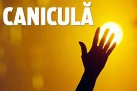 canicula2